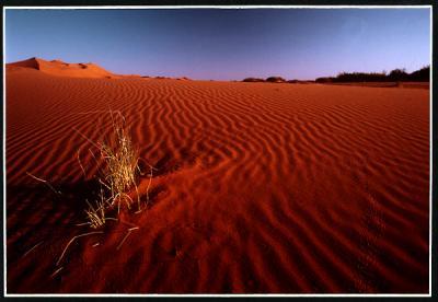 Sahara00.jpg