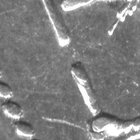 25kop1877_NI_fragment.jpg