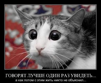 5866894ae9.jpg
