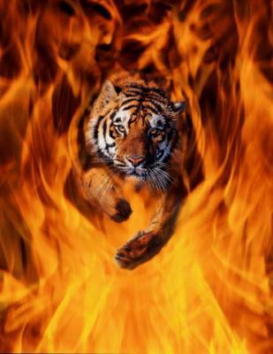 tigerbl.jpg