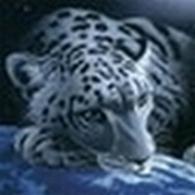 tiger (1018).jpg