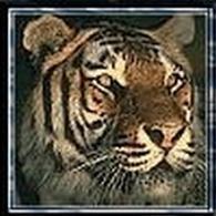 tiger (1019).jpg