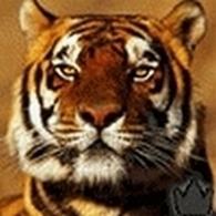 tiger (1021).JPG