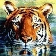 tiger (1024).jpg