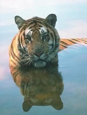 tiger (1028).jpg