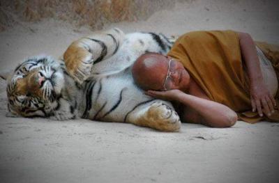tiger (1034).jpg