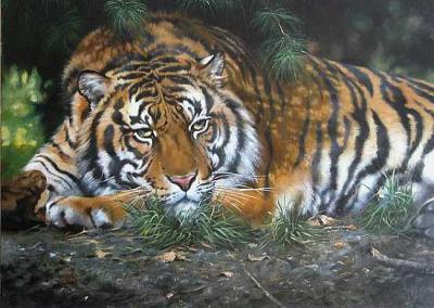 tiger (1051).jpg