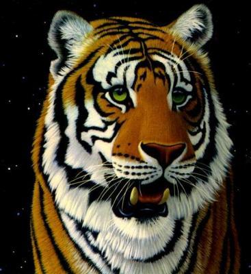 tiger (1098).jpg