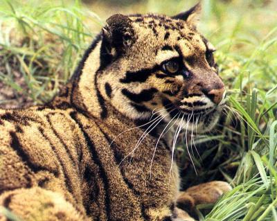 tiger (1211).jpg