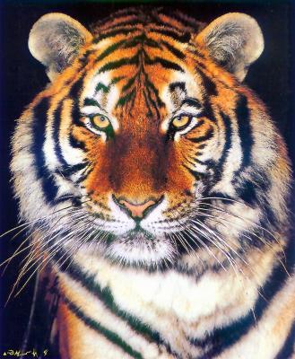 tiger (1237).jpg