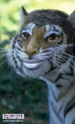 тигры разные (3).jpg