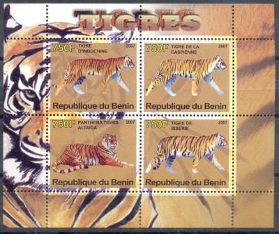 тигры Бенина.jpg