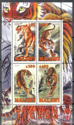 тигры Малави.jpg