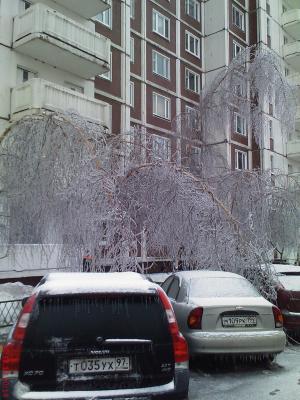 снег 12-2010 (1).jpg