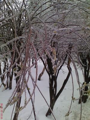 снег 12-2010 (3).jpg