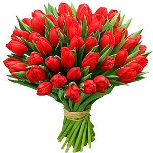 тюльпаны2.jpg
