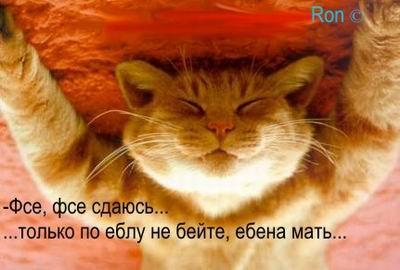 post-53-133501333434_thumb.jpg
