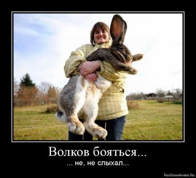 1340028875-volkov-boyatsya....jpg