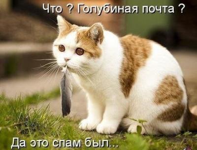 post-13471-134885232869_thumb.jpg