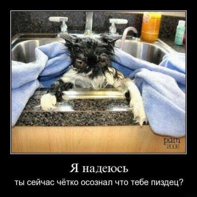 post-15796-134989404614_thumb.jpg