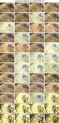 post-164-0-32957900-1362848821_thumb.jpg
