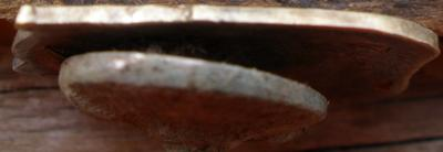 P9300784.JPG
