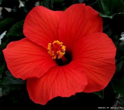 1180568925_flower_21.jpg