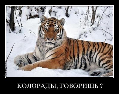 post-53-0-05277400-1399920448_thumb.jpg