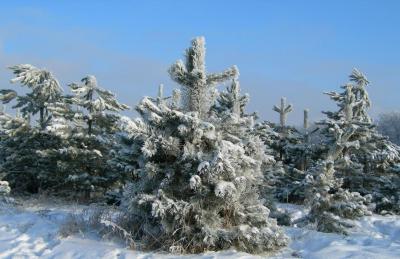 Зима06-07 (6).jpg