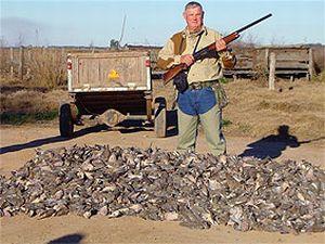 Ducks-Argent-canards%20Smol%2001.jpg
