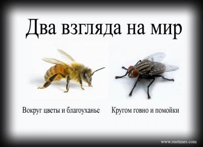 197603_239880859471526_1524463569_n.jpg