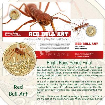 2014-BrightBugs-Unc-Red-Bull-Ant-Pkg.jpg