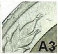 А3.jpg