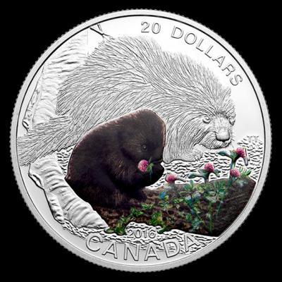 Канада $ 20 2016 Детёныши животных- Маленький дикообраз.jpg