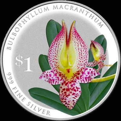 Сингапур 1 доллар 2016 орхидея Бульбофиллум крупноцветный (лат. Bulbophyllum-macranthum).jpg
