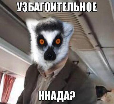 uzbagoysya-15.jpg