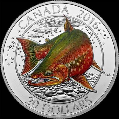 Канада, 2016 20 долларов Арктический голец (реверс).jpg