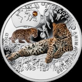 Леопард амурский2014.png