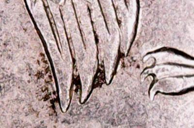 2 рубля 2003 года.JPG