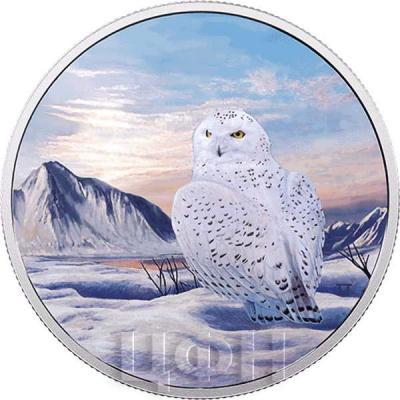 Канада 30 долларов 2018 «Снежная сова» (реверс).jpg