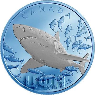 Канада 30 долларов 2018 год Большая белая акула (реверс).jpg