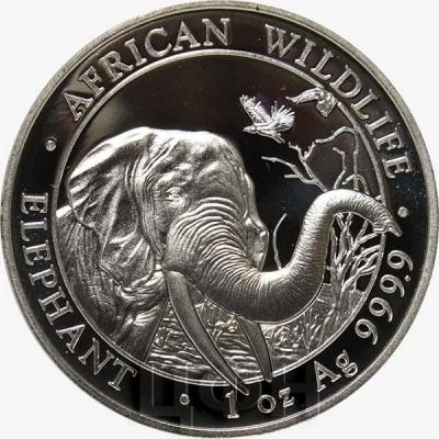 Сомали 100 шиллингов 2018 год «Слоны» (реверс).jpg