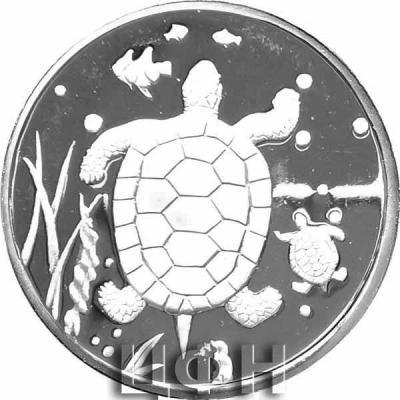 «20 WON - Turtle».jpg