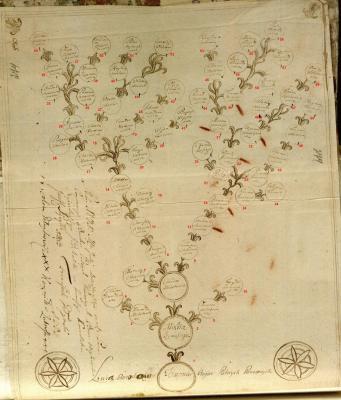 Дерево Бородов с номерами.jpg