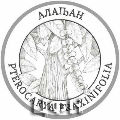 2020 год «Флора Абхазии» Pterocarya pterocarpa (Michx.) Kunth ex I. Iljinsk. – Лапина крылоплодная – Алаԥан.jpg