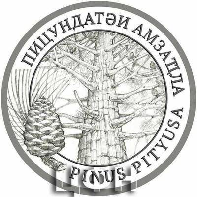2020 год «Флора Абхазии» Pinus pityusa Stev. – Сосна пицундская – Пицундатәи амзаҵла.jpg